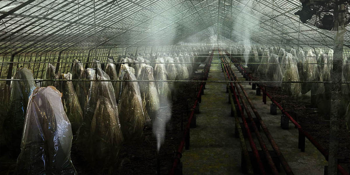 Concept Triffids in Greenhouse